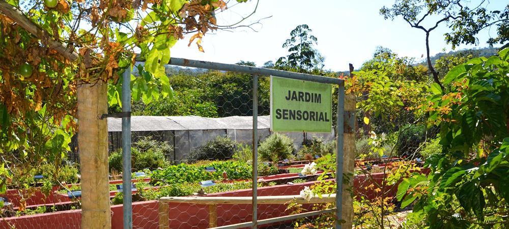 plantas jardim sensorial : plantas jardim sensorial:Plantas Medicinais e Condimentares no Jardim Sensorial