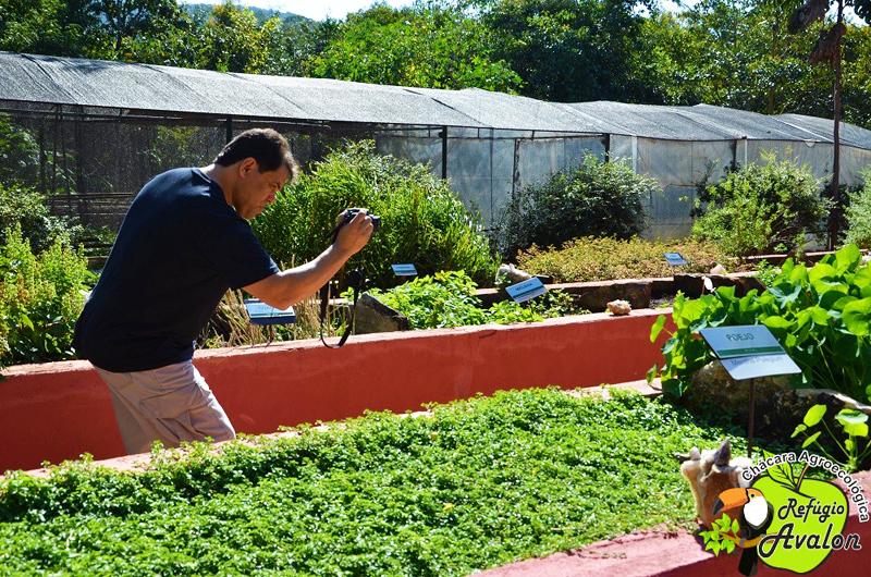 plantas jardim sensorial:Plantas Medicinais e Condimentares no Jardim Sensorial